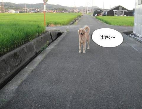 run0811-2.JPG
