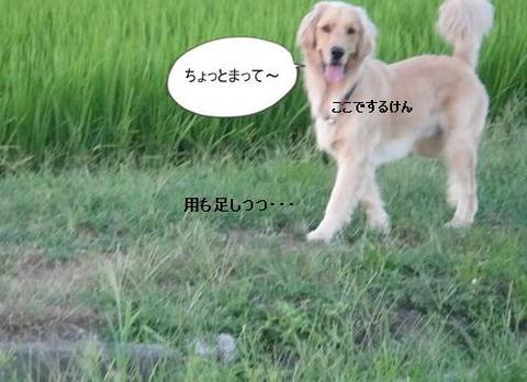 run0811-7.JPG