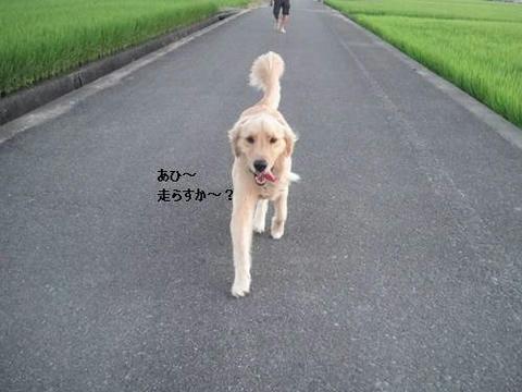 run0811-8.JPG