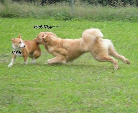 run1011-5.JPG