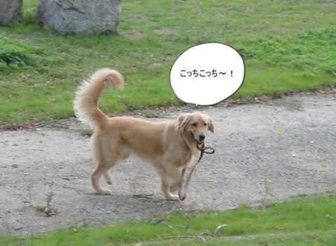 run1107-2.JPG