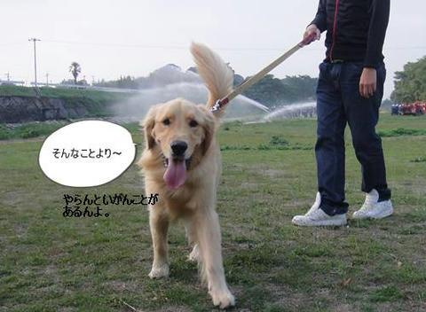 run1107-7.JPG