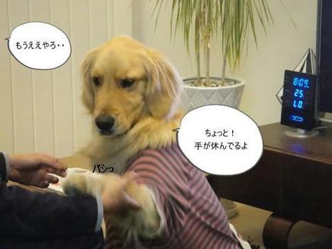 run20110406-2.JPG