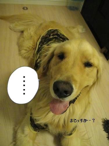 run20110407-2.JPG