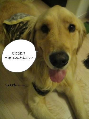 run20110407-3.JPG