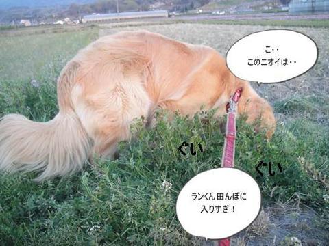 run20110413-1.JPG