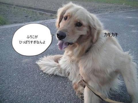 run20110413-4.JPG