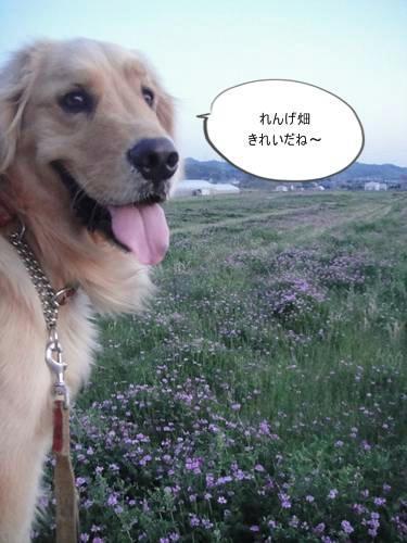 run20110413-5.JPG