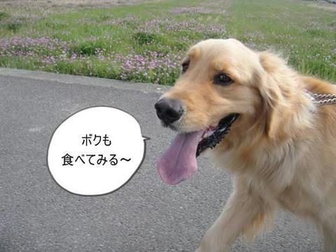 run20110418-4.JPG