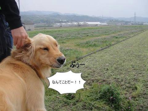 run20110421-1.JPG