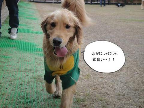 run20110422-2.JPG