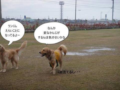 run20110422-8.JPG
