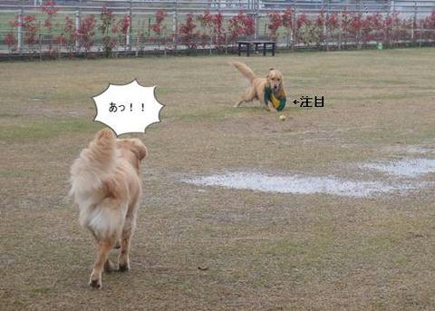 run20110422-7.JPG