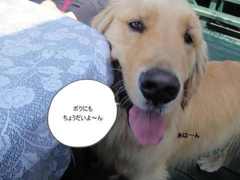 run20110426-6.JPG