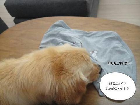 run20110510-1.JPG