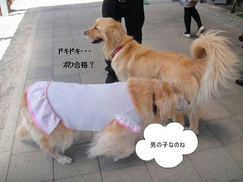 run20110516-5.JPG