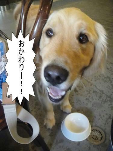 run20110517-4.JPG