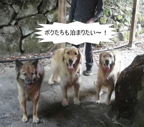 run20110517-11.JPG