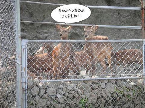 run20110520-8.JPG