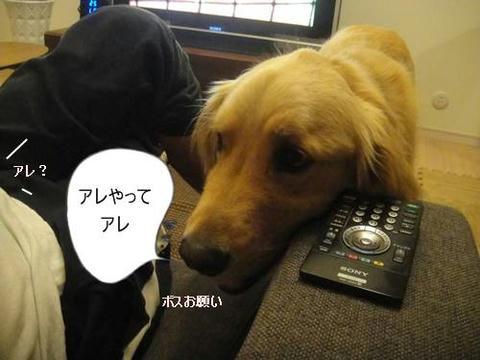 run20110522-2.JPG