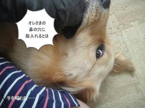 RUN20110529-3.JPG