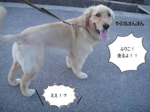 run20110530-1.JPG