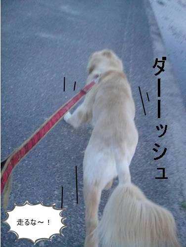 run20110530-2.JPG