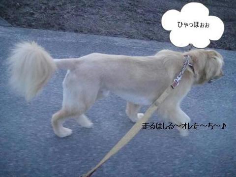 run20110530-3.JPG