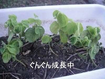 run20110601-5.JPG