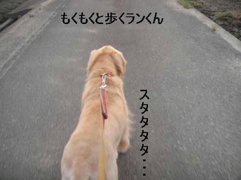 run20110602-4.JPG