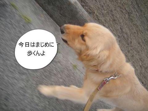 run20110602-5.JPG