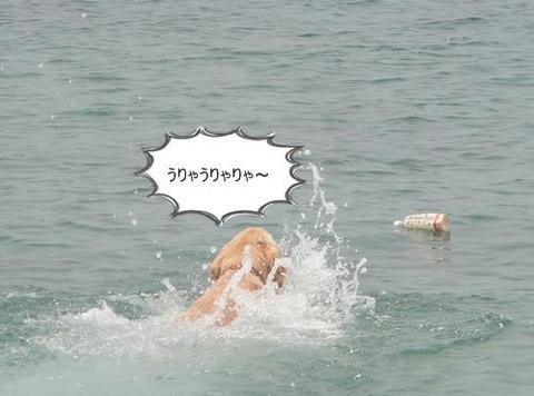 run20110605-6.JPG