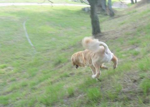 run20110608-2.JPG
