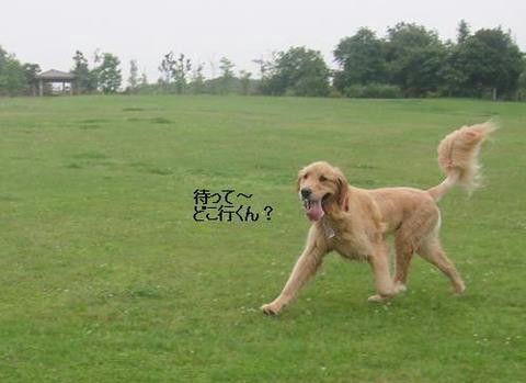 run20110614-1.JPG