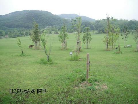 run20110613-4.JPG