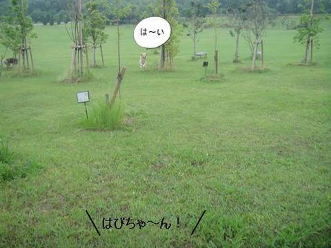 run20110613-5.JPG