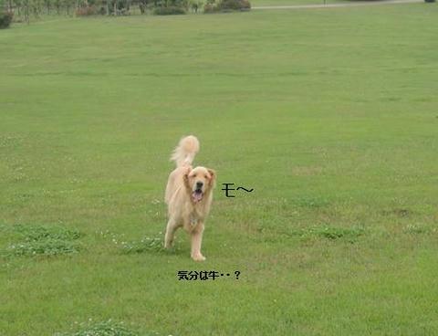 run20110613-6.JPG