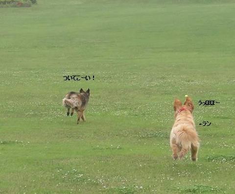 run20110613-8.JPG