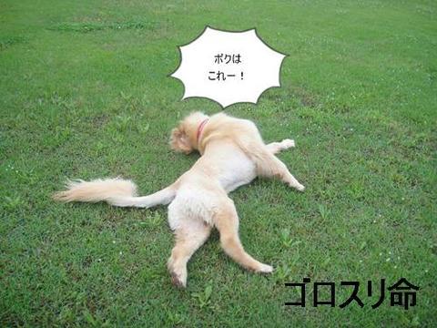 run20110613-11.JPG