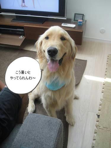 run20110625-3.JPG