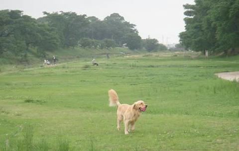 run20110628-1.JPG