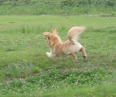 run20110630-3.JPG