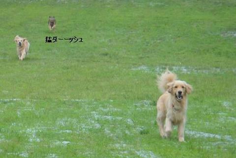 run20110703-2.JPG