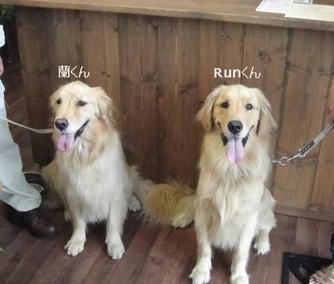 run20110903-1.JPG