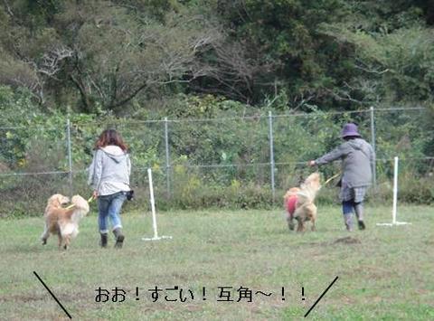 run20111016-9.JPG