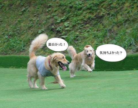 run20111020-4.JPG