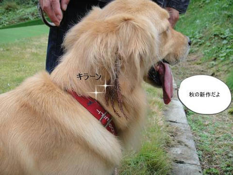 run20111020-7.JPG