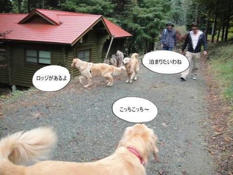 run20111020-11.JPG