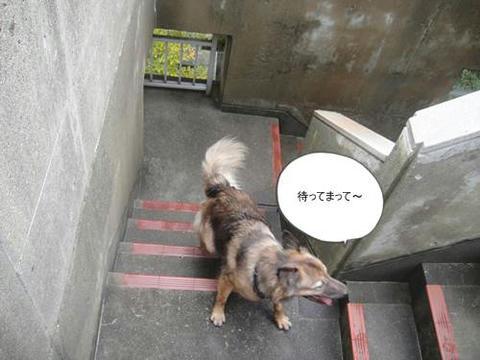 run20111020-16.JPG