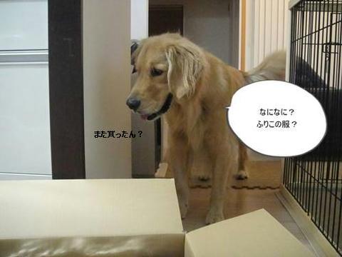 run20111028-1.JPG